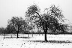 The Orchard at Kenn