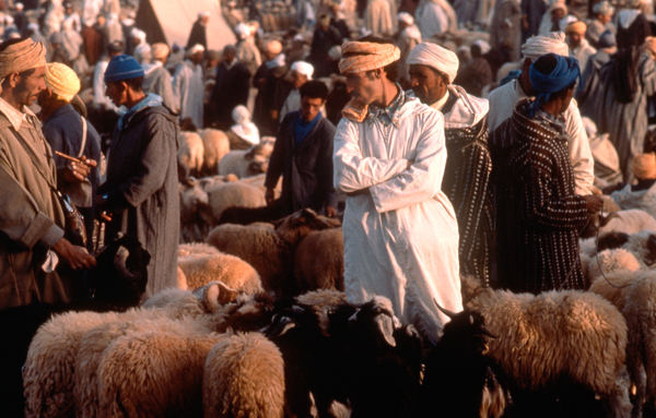 Sheep Market Imilchil