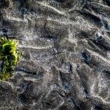 Glenbrittle Seaweed