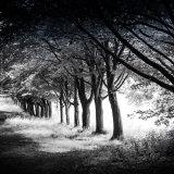 Tree Lined Avenue, Rivington