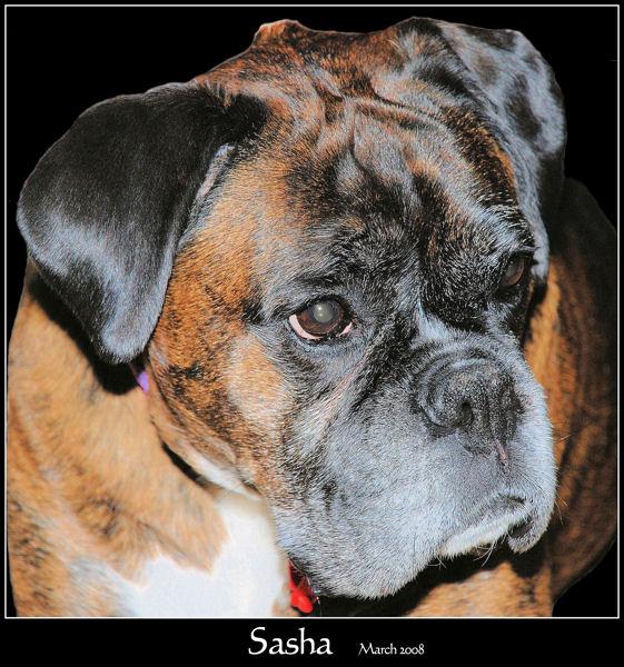 Portrait of Sasha