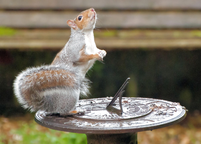 Squirrel on Sundial