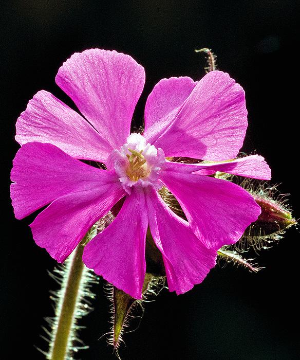 Garden Weed (2)