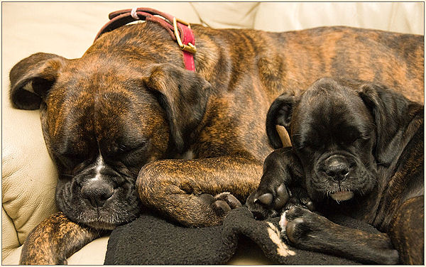 Let Sleeping Dogs .....