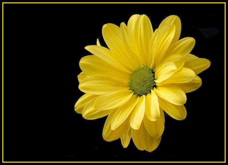 Yellow on Black (2)