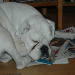 Reading the Sunday papers...