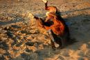 SCRATCHING HORSE (EGYPT)