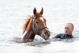 Headwind with trainer Karl Kukk