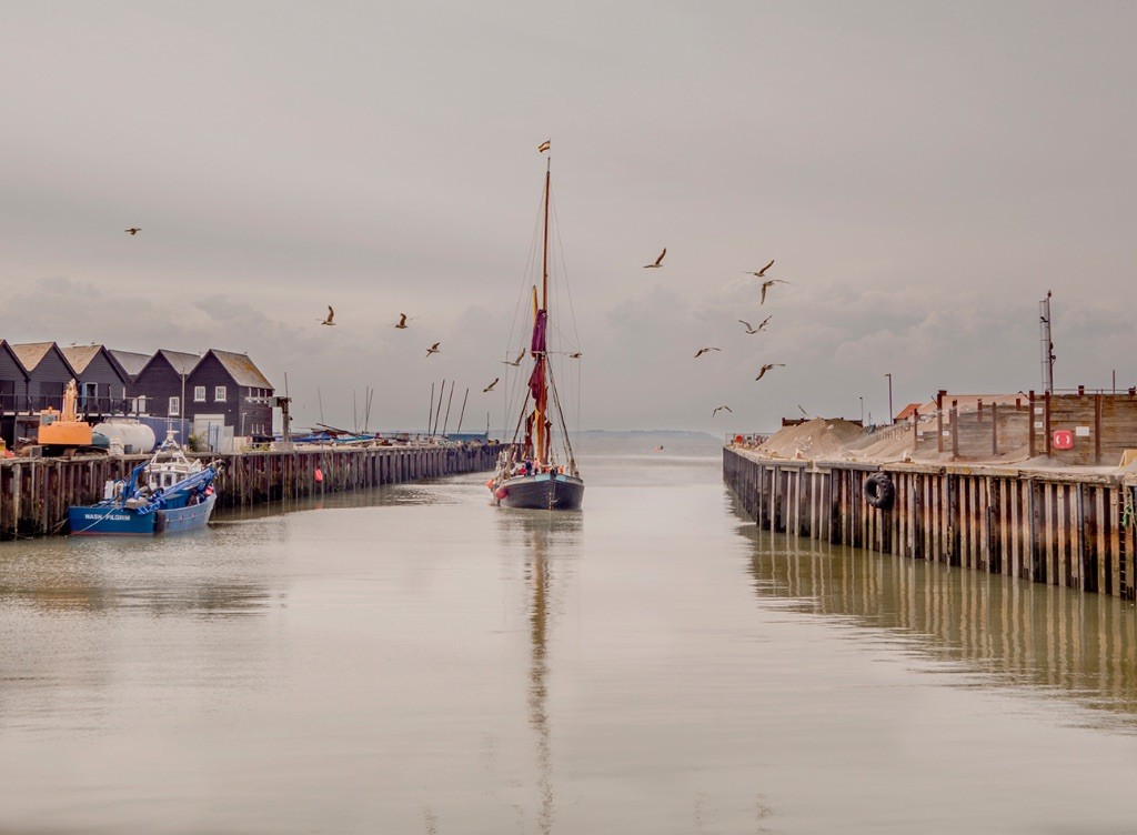 Greta & Gulls in Whitstable Harbour