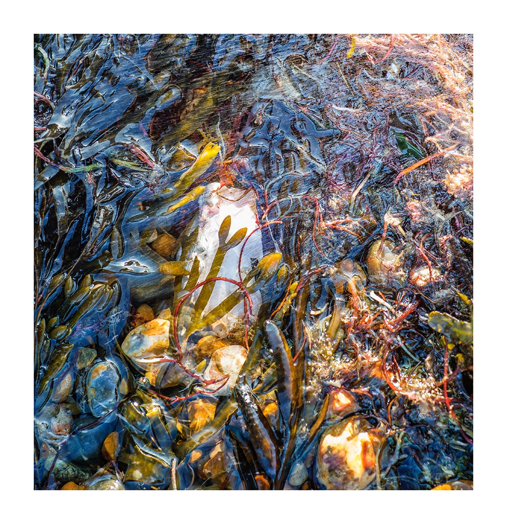 Tidal seaweed
