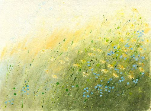 Daises and forget me nots