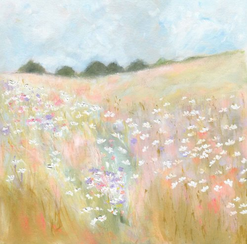 Daisies in the hay field