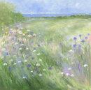 Cornflower fields