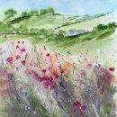Field poppies