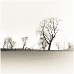 Cotswold trees