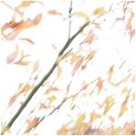 Autumn Breeze, Wisley
