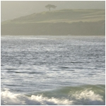 Lone Tree, Carmel