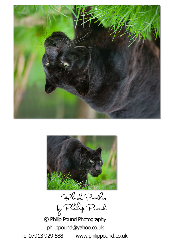 Black Panther A5 Greetings Card