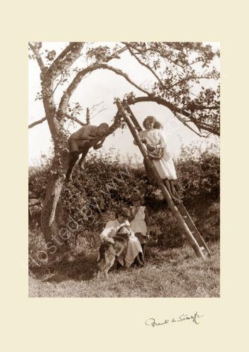 'Children in a Fruit Tree'