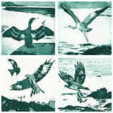 Small bird prints