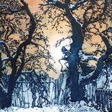Snowy oaks at the Big Burn