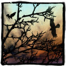 Gaelic tree alphabeth: uath: hawthorn