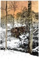 Winter trees, Big Burn