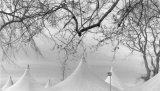 White Peaks, Kew Gardens