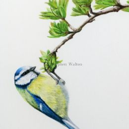 Balancing Blue - detail