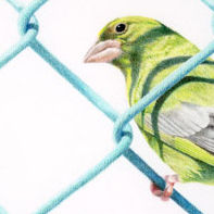 Green Finch Green Fence