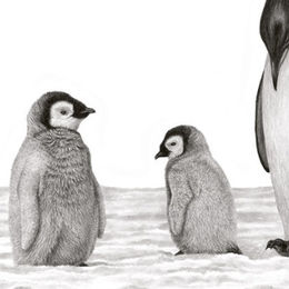 Seven Emperor Penguins - Awaiting the Blizzard