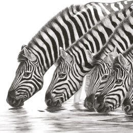 Ten Zebra's - Ever Alert