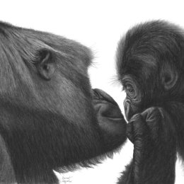 Two Gorilla's - Tenderness