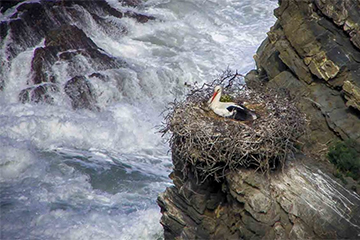 Cliff Edge Perch