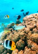 Moorea Bay, Polynesia