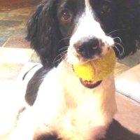 Rosie and tennis ball photo ref