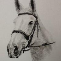 Tim pencil drawing commission