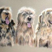 Triple dog portrait commission in coloured pencils