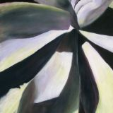 Agave in Sunlight