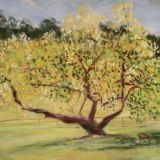 Kenwood Magnolia