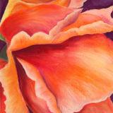 The Orange Rose I