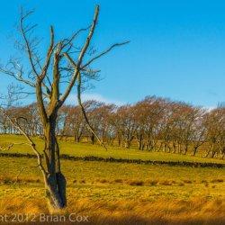 20120218-IMG 4227-Near Lanark