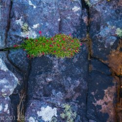 20120419-IMG 4684-Shore Plantlife, Ealaghol, An t-Eilean Sgitheanach