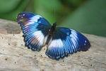 Butterfly 2.