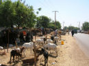 A street cattle market