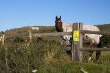 Horsewatch