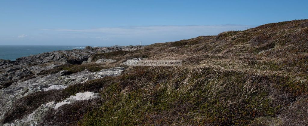 Heather hills to the Rhinns Lighthouse