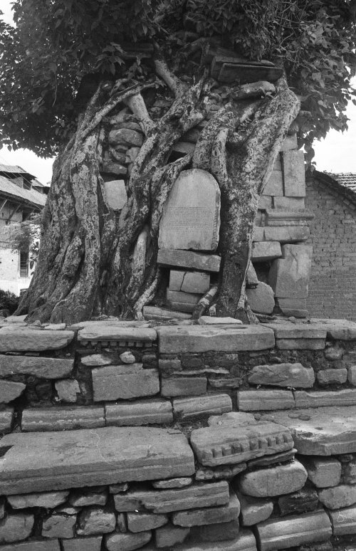 Pipal tree and shrine, Kirtipur