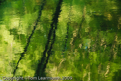 River Teifi, Ceredigion