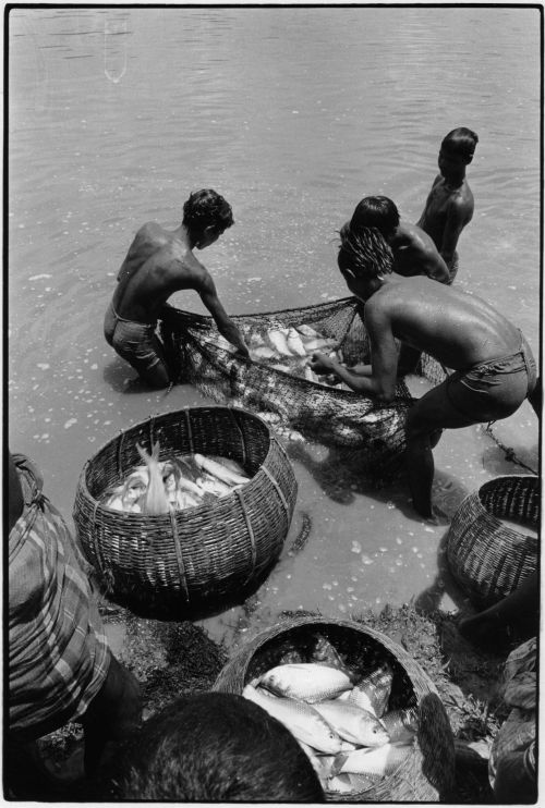 Carp catch